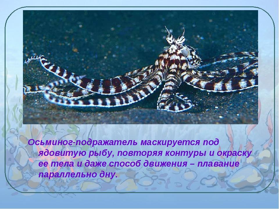 Осьминог-подражатель маскируется под ядовитую рыбу, повторяя контуры и окрас...