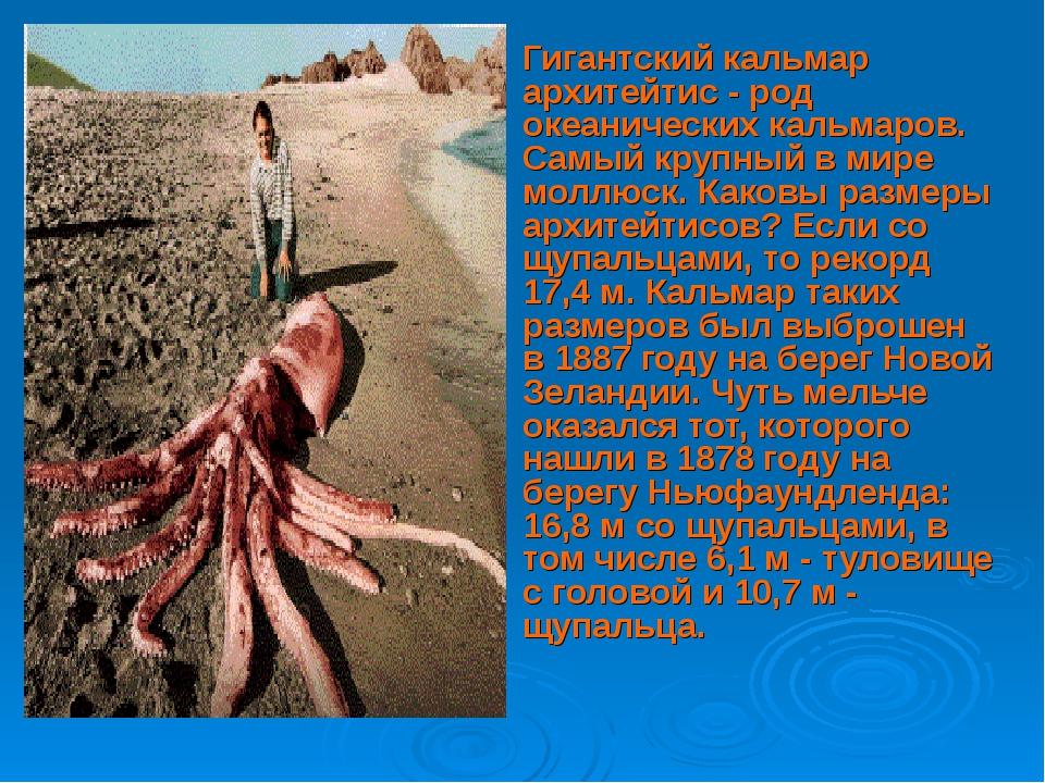 Гигантский кальмар архитейтис - род океанических кальмаров. Самый крупный в...