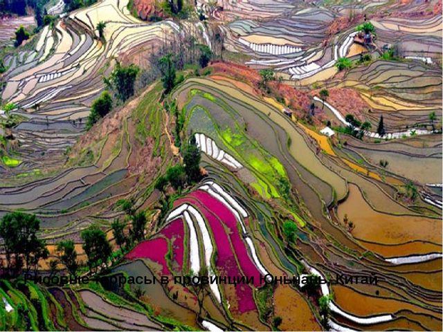 Рисовые террасы впровинции Юньнань, Китай