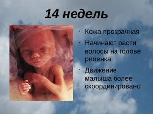 14 недель Кожа прозрачная Начинают расти волосы на голове ребёнка Движение ма