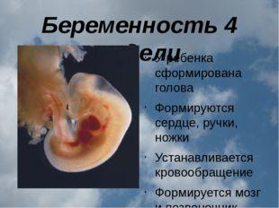 Беременность 4 недели У ребенка сформирована голова Формируются сердце, ручки