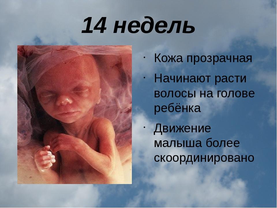 14 недель Кожа прозрачная Начинают расти волосы на голове ребёнка Движение ма...