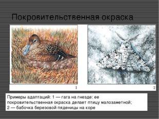 Покровительственная окраска Примеры адаптаций: 1 — гага на гнезде: ее покрови