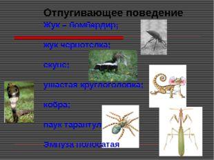 Отпугивающее поведение Жук – бомбардир; жук чернотелка; скунс; ушастая кругло