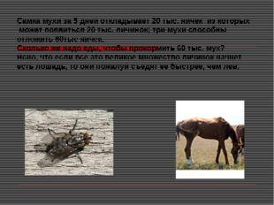 Самка мухи за 5 дней откладывает 20 тыс. яичек из которых может появиться 20