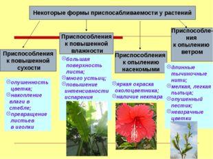 Некоторые формы приспосабливаемости у растений Приспособления к повышенной су