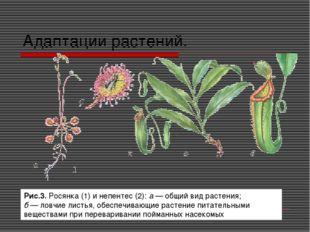 Адаптации растений. Рис.3. Росянка (1) и непентес (2): а — общий вид растения