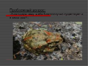 Проблемный вопрос: «Благодаря чему жаба благополучно существует и в наши дни?»
