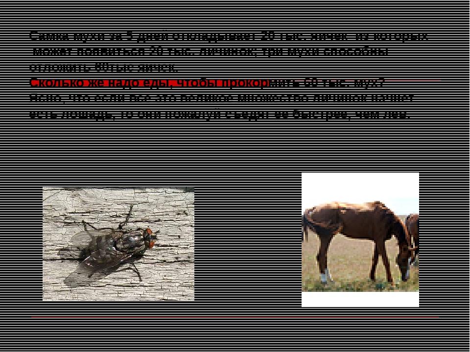 Самка мухи за 5 дней откладывает 20 тыс. яичек из которых может появиться 20...