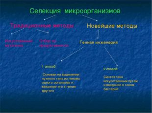 Селекция микроорганизмов Традиционные методы Новейшие методы Искусственный му