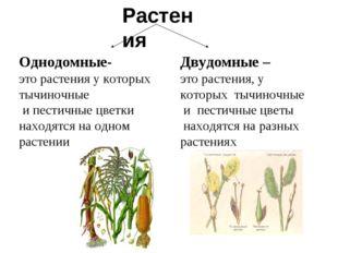 Растения Однодомные- это растения у которых тычиночные и пестичные цветки нах