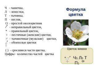 Формула цветка Ч - чашечка, Л - лепестки, Т - тычинка, П - пестик, О - просто