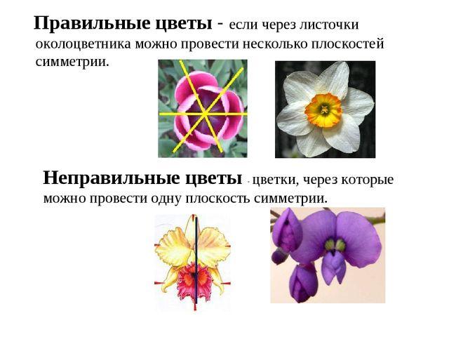 Правильные цветы - если через листочки околоцветника можно провести нескольк...