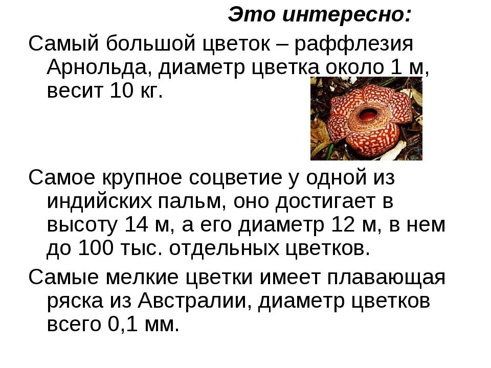 Это интересно: Самый большой цветок – раффлезия Арнольда, диаметр цветка око...