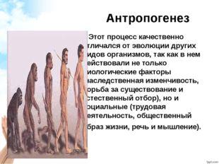 Антропогенез Этот процесс качественно отличался от эволюции других видов орга