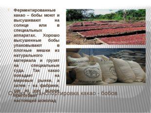 Сушка и транспортировка какао - бобов Ферментированные какао – бобы моют и вы