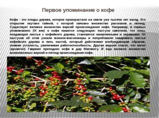 Первое упоминание о кофе Кофе - это плоды дерева, которое произрастало на зем