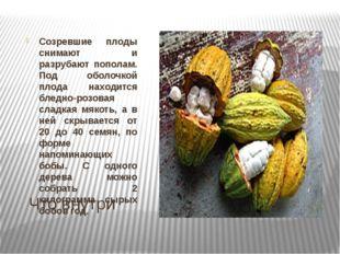 Что внутри Созревшие плоды снимают и разрубают пополам. Под оболочкой плода н