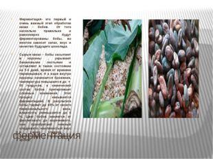ферментация Ферментация- это первый и очень важный этап обработки какао – боб