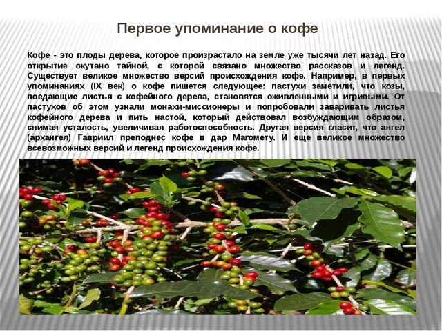 Первое упоминание о кофе Кофе - это плоды дерева, которое произрастало на зем...