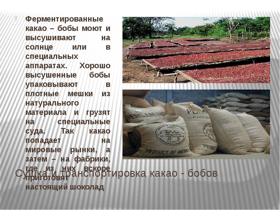 Сушка и транспортировка какао - бобов Ферментированные какао – бобы моют и вы...