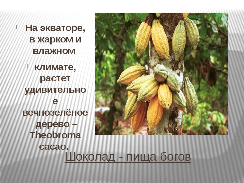 Шоколад - пища богов На экваторе, в жарком и влажном климате, растет удивител...