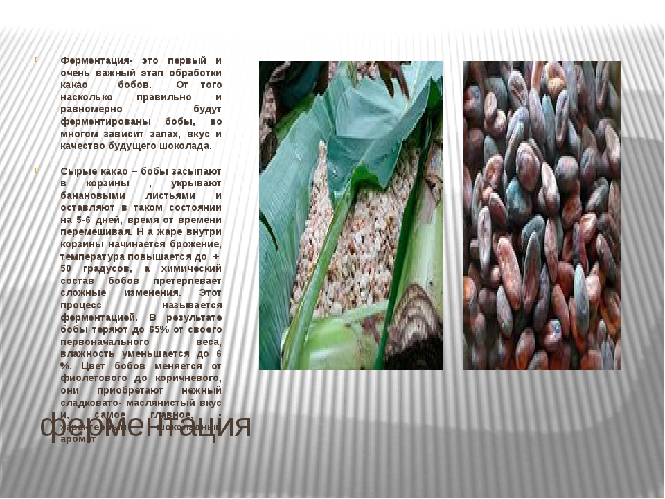ферментация Ферментация- это первый и очень важный этап обработки какао – боб...
