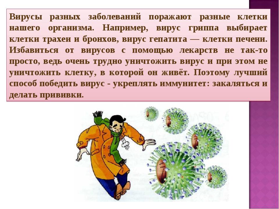 Вирусы разных заболеваний поражают разные клетки нашего организма. Например,...