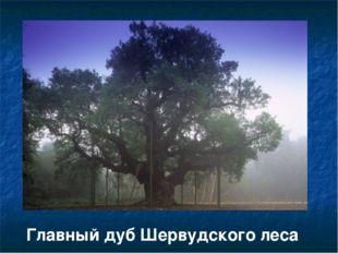 Главный дуб Шервудского леса