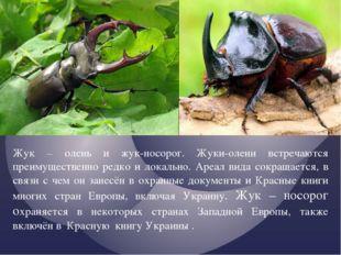 Жук – олень и жук-носорог. Жуки-олени встречаются преимущественно редко и лок