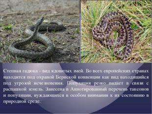 Степная гадюка - вид ядовитых змей. Во всех европейских странах находится под
