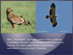 Орел – могильник - крупная хищная птица семейства ястребиных. Гнездится в сте