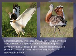 Стрепет и дрофа, относятся к числу исчезающих степных птиц, внесенные в Красн