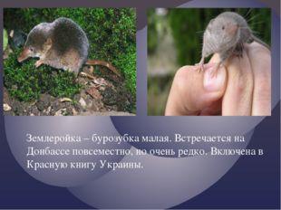 Землеройка – бурозубка малая. Встречается на Донбассе повсеместно, но очень р
