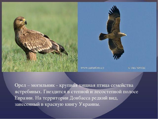 Орел – могильник - крупная хищная птица семейства ястребиных. Гнездится в сте...