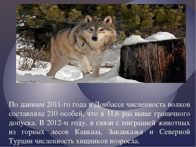По данным 2011-го года в Донбассе численность волков составляла 210 особей, ч...