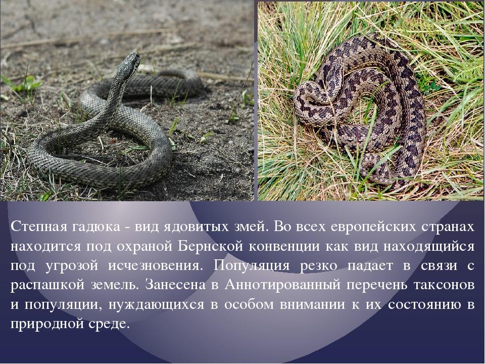 Степная гадюка - вид ядовитых змей. Во всех европейских странах находится под...