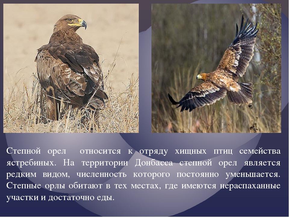Степной орел относится к отряду хищных птиц семейства ястребиных. На территор...