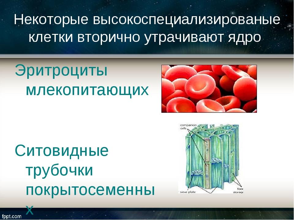 Эритроциты млекопитающих Ситовидные трубочки покрытосеменных Некоторые высоко...