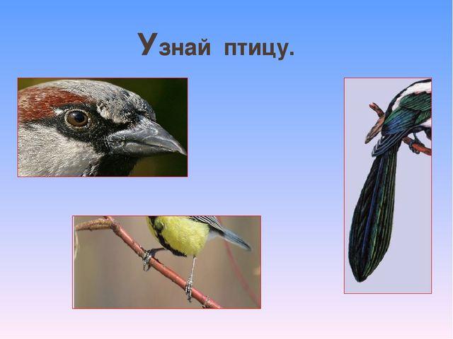 Узнай птицу.