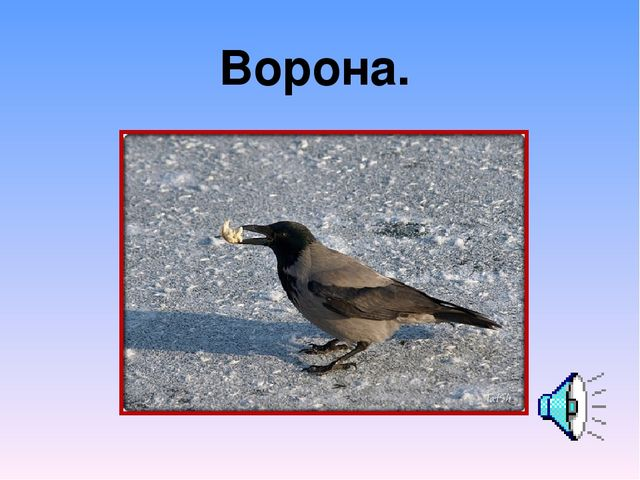 Ворона.