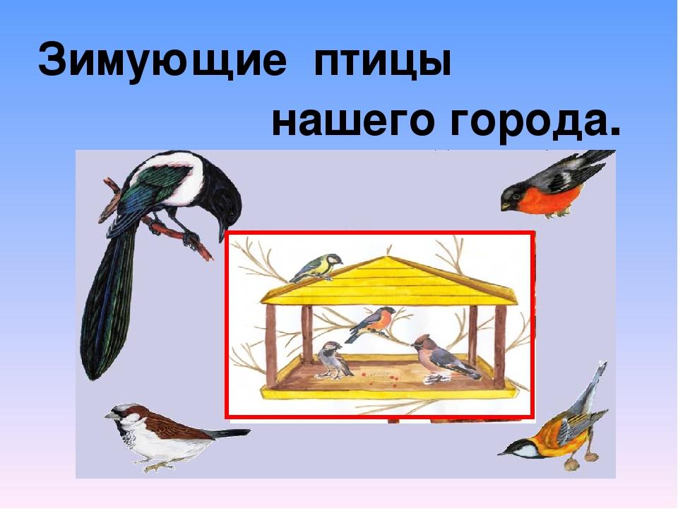 Зимующие птицы нашего города. а