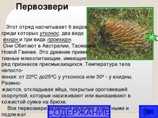 Первозвери Этот отряд насчитывает 6 видов, среди которых утконос, два вида е