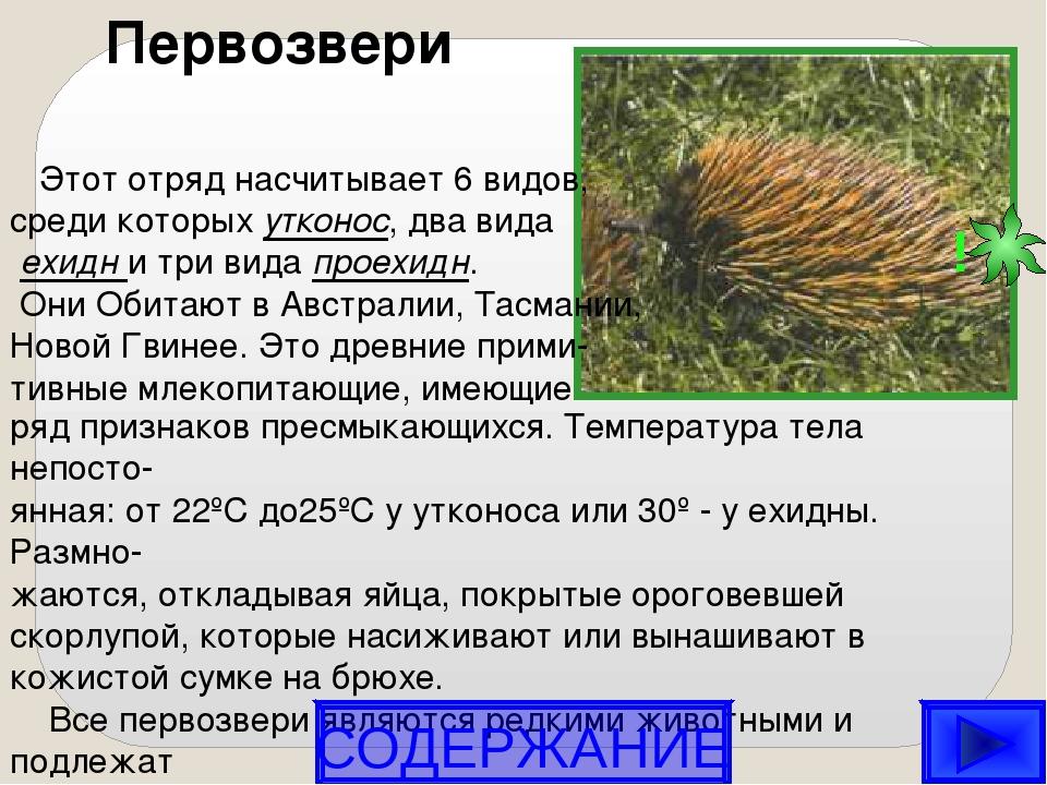 Первозвери Этот отряд насчитывает 6 видов, среди которых утконос, два вида е...