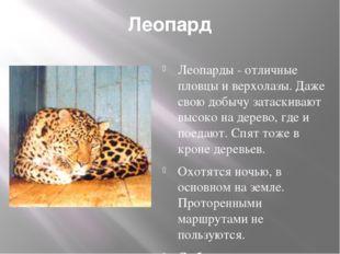 Леопард Леопарды - отличные пловцы и верхолазы. Даже свою добычу затаскивают