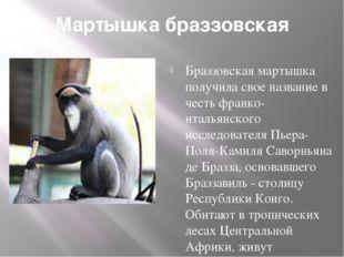 Мартышка браззовская Браззовская мартышка получила свое название в честь фран