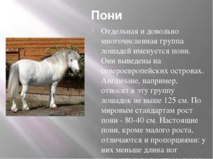 Пони Отдельная и довольно многочисленная группа лошадей именуется пони. Они в