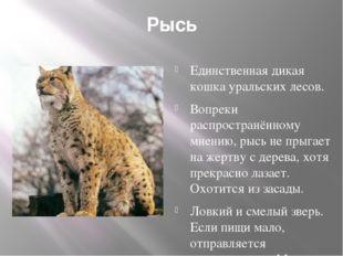 Рысь Единственная дикая кошка уральских лесов. Вопреки распространённому мнен