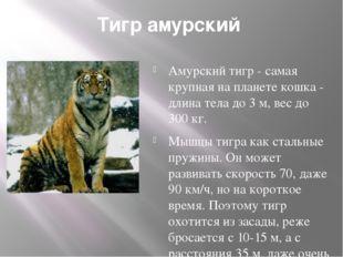 Тигр амурский Амурский тигр - самая крупная на планете кошка - длина тела до