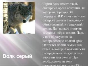 Волк серый Серый волк имеет очень обширный ареал обитания, на котором образуе